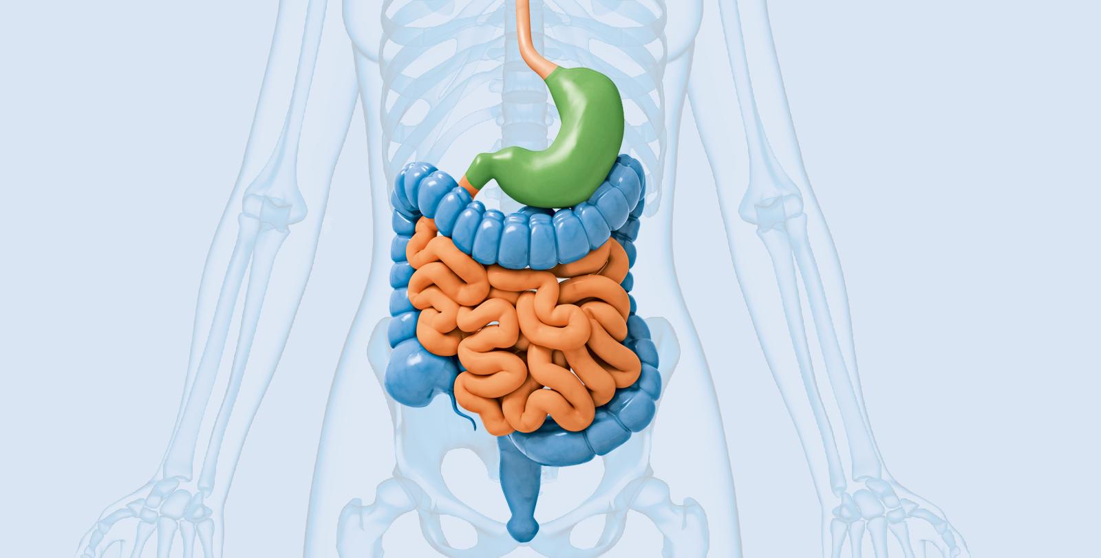 Gesunde Verdauung oder Verdauungsstörung?